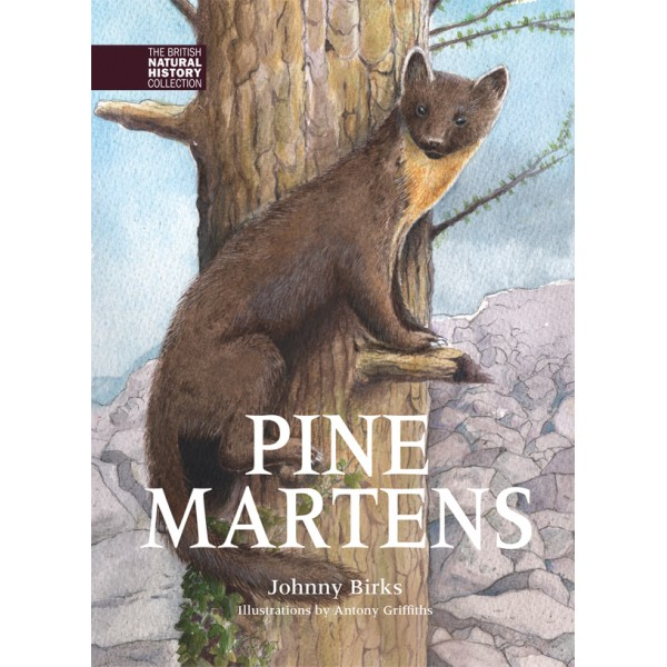 Pine Martens