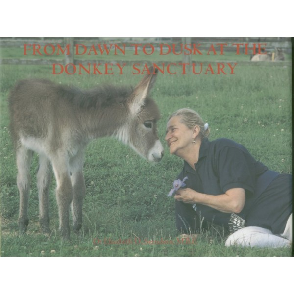 From Dawn to Dusk at the Donkey Sanctuary